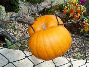 pumpkin-317355_640