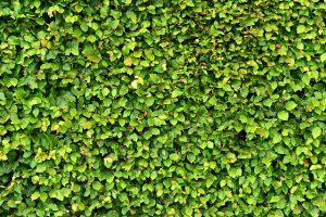 Decke Der Naturlich Grune Zaun Gartenzaun Markt